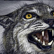 Wildcat Ferocity Print by Daniel Hagerman