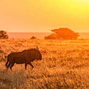 Wildebeest Sunset - Namibia Africa Photograph Art Print