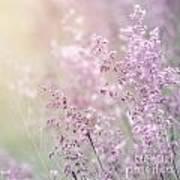 Wildflower Fine Art Background Art Print