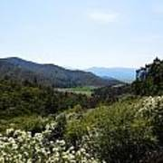 Wildflower Mountain View Art Print