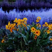 Wildflower Reflection Art Print