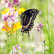 Wildflowers And Butterfly Art Print