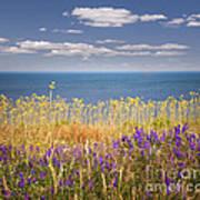 Wildflowers And Ocean Art Print