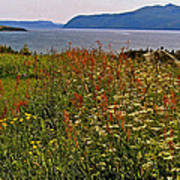 Wildflowers At Lobster Cove Head In Gros Morne Np-nl Art Print