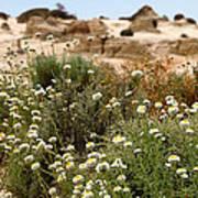 Wildflowers At Mungo National Park Art Print
