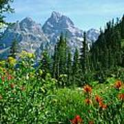 1m9372-v-wildflowers In Cascade Canyon, Tetons Art Print