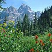 1m9371-h-wildflowers In Cascade Canyon, Tetons Art Print