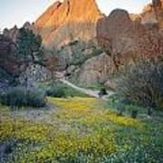 1b6430 Wildflowers In Pinnacles National Park Art Print