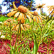 Wildflowers In The Wilds Of Colorado Art Print