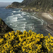 Wildflowers On An Atypical Winter's Day On The Oregon Coast Art Print