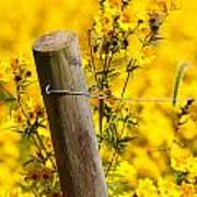 Wildflowers On Fence Post Art Print