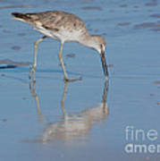 Willet Reflection Art Print