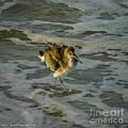 Willet Washing 1 Art Print