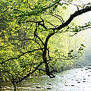 Williams River Mist Art Print