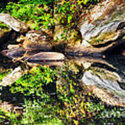 Williams River Reflections Art Print by Thomas R Fletcher
