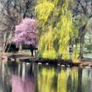 Willow And Cherry By Lake Art Print