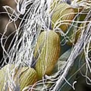 Willow Herb Seed Pod, Sem Art Print