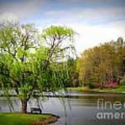 Willow Lake Art Print by Crystal Joy Photography