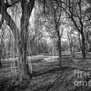 Willows In Spring Park Art Print