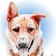 Willy A Former Shelter Sweetie Art Print