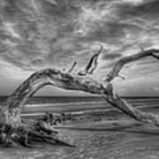 Wind Bent Driftwood Black And White Art Print