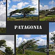 Wind-bent Flag Trees In Tierra Del Fuego Art Print