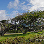 Wind-bent Tree In Tierra Del Fuego Patagonia  Art Print