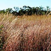 Windswept Grassy Meadow Art Print