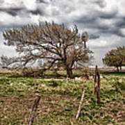 Wind Swept Kansas Tree Art Print