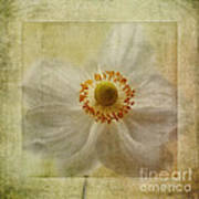 Windflower Textures Art Print