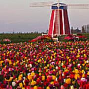 Windmill Of Flowers Art Print
