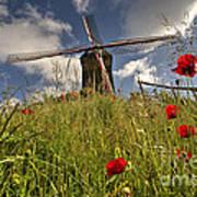 Windmill Poppies  Art Print