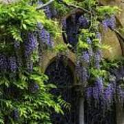 Window Behind Wisteria Art Print