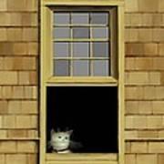 Window Cat    No. 2 Art Print