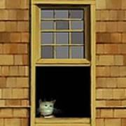 Window Cat    No.3 Art Print