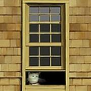 Window Cat    No.4 Art Print
