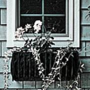 Window Dresser Art Print by Bonnie Bruno
