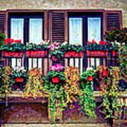 Window Flower Art Print
