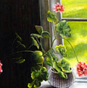 Window Geranium Art Print