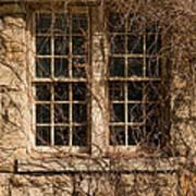 Windows And Weeds Art Print