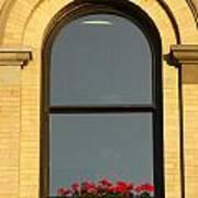 Windowsill Gerraniums Art Print