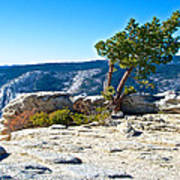 Windswept Tree On Top Of Sentinel Dome In Yosemite Np-ca Art Print