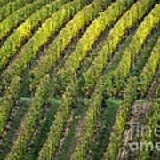 Wine Acreage In Germany Art Print