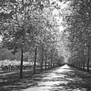 Wine Country Napa Black And White Print by Suzanne Gaff