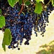 Wine Grapes Art Print by Kristina Deane