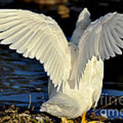 Wings Of A White Duck Art Print