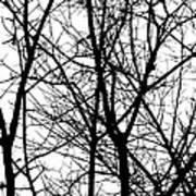 Winter 15 Art Print