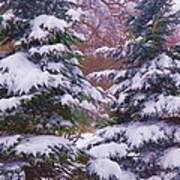 Winter  5 Art Print