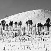 Winter After Fire-san Francisco Peaks Art Print