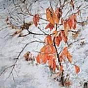Winter Ash Art Print
